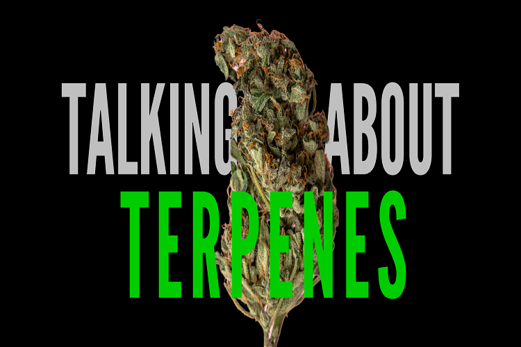 The Beginners Guide to Terpenes
